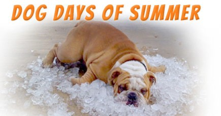 "Siriusly, The Meaning Behind ""Dog Days of Summer"" Has"
